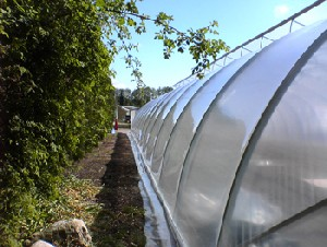 Greenhouse foil Scandinavian Class Sun Saver Clear 5 Pro 180micron 12 m wide in any length price/12m/running meter