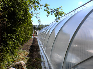 Greenhouse foil Scandinavian Class Sun Saver Clear 5 Pro 180micron 6.5m wide in any length, price/6.5m/running meter
