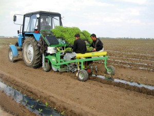 Planting machine for 2 rows